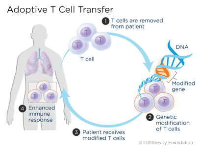 adoptive-t-cell-transfer
